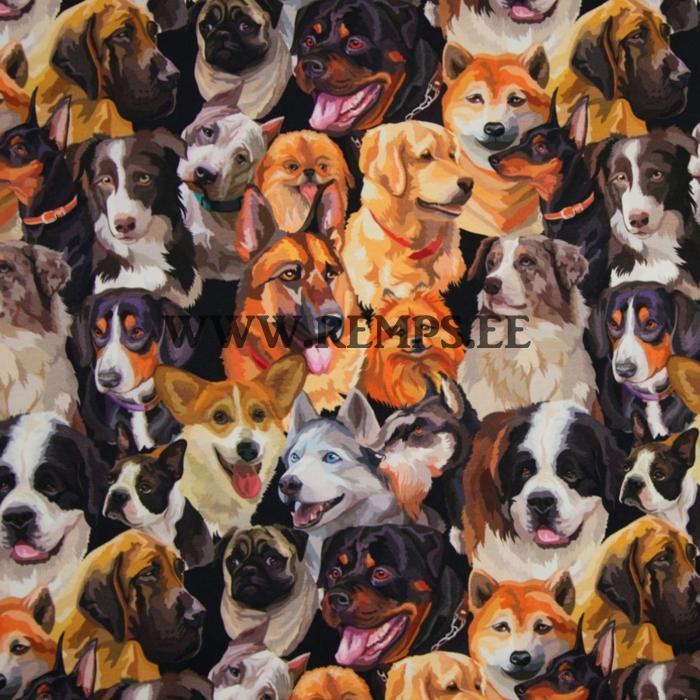 TR-erinevad-koerad.jpg