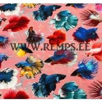 Trikooriie akvaariumi kalad