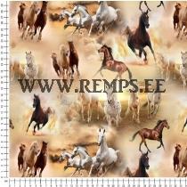 Trikooriie hobused