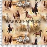 Jersey horses